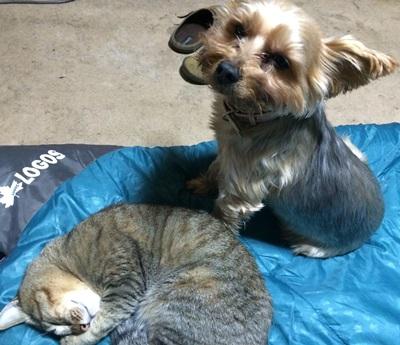 ワンコと猫さんの関係