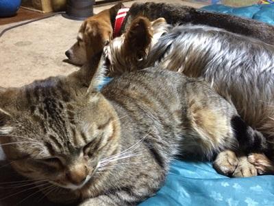 ワンコと猫さん